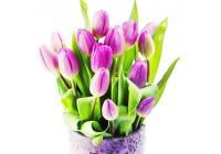 С прекрасным праздником весны — 8 Марта!